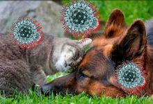 Photo of შინაური ცხოველების პატრონები covid-19 ადვილად უმკლავდებიან – პოლონელი მეცნიერი
