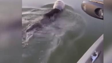 Photo of მსუნაგი დათვი დახრჩობას კეთილი ადამიანების დახმარებით გადაურჩა (ვიდეო)