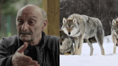 Photo of ვინ არის ქართველი მეცნიერი, რომელმაც ორი წელი მგლებთან ერთად იცხოვრა და ცოცხალი გადარჩა