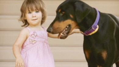 Photo of ძაღლმა ერთი წლის ავსტრალიელი გოგონა სიკვდილგან იხსნა