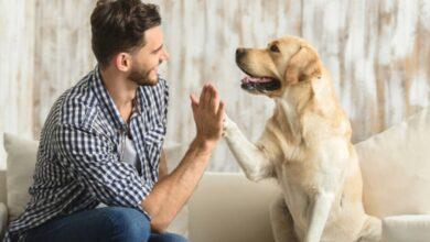 Photo of კარდიოლოგები თავიანთ პაციენტებს ძაღლის აყვანას ურჩევენ